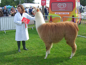 Photo of Bluecaps Frieda, Kent County Show